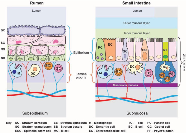 Invited Review: Ruminal microbes, microbial products, and